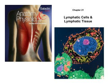 Lymphatic Cells & Lymphatic Tissue
