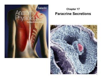 Paracrine Secretions