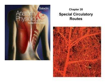 Special Circulatory Routes