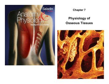 5 8 1 i48 anatomy 82 physiology coloring workbook anatomy and physiology coloring workbook answers chapter - Anatomy And Physiology Coloring Workbook Answers Chapter 7