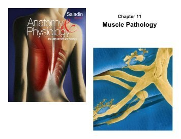 Muscle Pathology