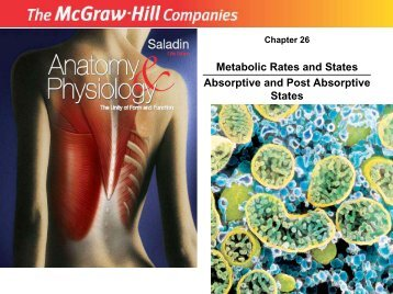 Metabolic Rates and States Absorptive and Post Absorptive States