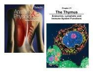 The Thymus