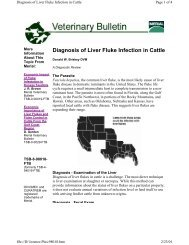 Diagnosis of Liver Fluke Infection in Cattle
