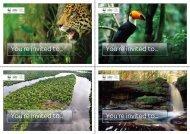 Invitations - Sky Rainforest Rescue