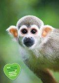 Sky Rainforest Rescue - Page 7