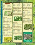 SHRUBS - Page 4