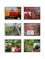 New Choices in Shade Trees - Jeffries Nurseries Ltd.
