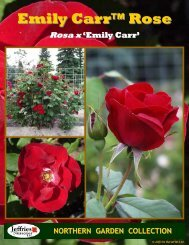 Emily Carr Rose