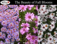 The Beauty of Fall Blooms