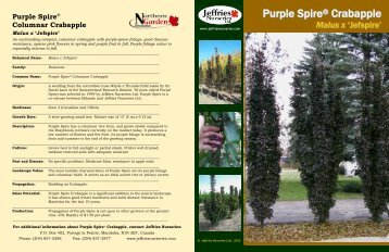Purple Spire Crabapple