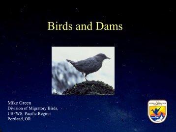 Birds and Dams