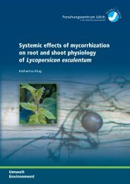 on root and shoot physiology of Lycopersicon esculentum