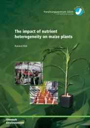 The impact of nutrient heterogeneity on maize plants