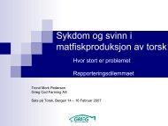 Sykdom og svinn i matfiskproduksjon av torsk