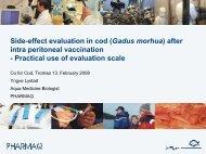 Side-effect evaluation in cod (Gadus morhua) after ... - Sats på torsk