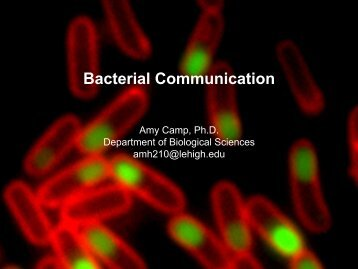 Bacterial Communication