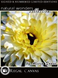 Meet the Artist – Alicia Soave