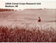 USDA Cereal Crops Research Unit Madison WI