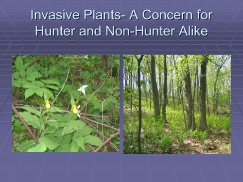 Invasive Plants- A Concern for Hunter and Non-Hunter Alike