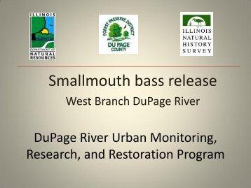 Smallmouth bass release