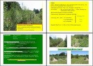Herbizidversuche in Energieholz •Fakten : •Kyoto ... - Land-Impulse
