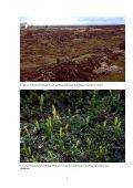 Gróðurfar við jarðvarmavirkjun í Bjarnarflagi í Mývatnssveit. Valkostir ... - Page 7