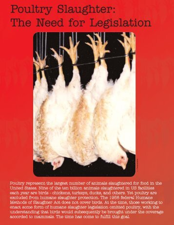 Poultry Slaughter The Need for Legislation