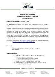 Volontariat SAVE African Animals, Afrikanische Wildhunde