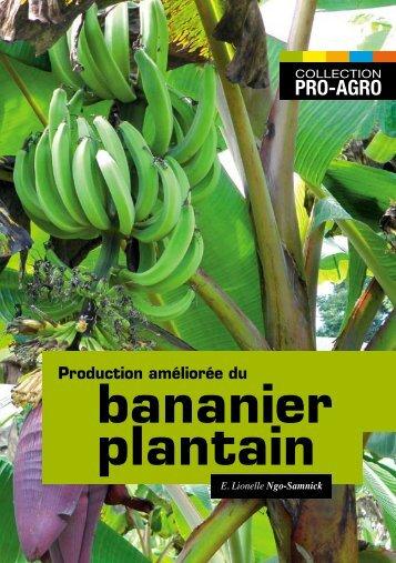 bananier plantain