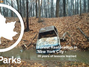 Forest Restoration in New York City -