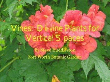 Vines Di-vine Plants for Vertical Spaces