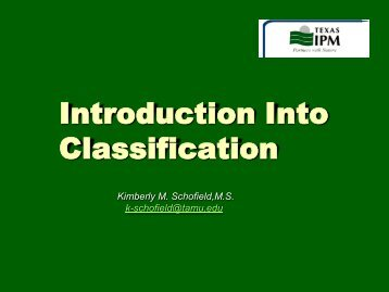 Introduction Into Classification