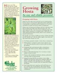 Growing Hosta