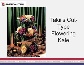 Takii's Cut- Type Flowering Kale