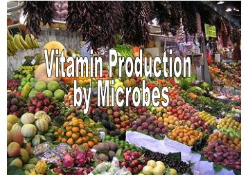 6/13/2008 Vitamin Production (NRM) 1