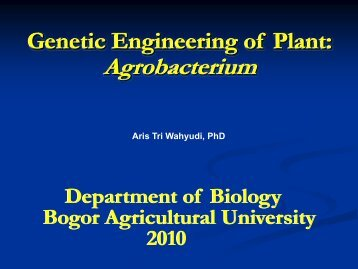Genetic Engineering of Plant