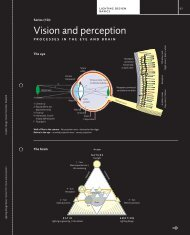 Vision and perception