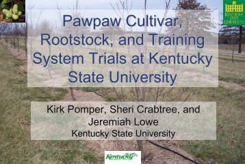 Pawpaw Cultivar, Rootstock, and Training System Trials at Kentucky ...
