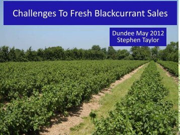 Challenges To Fresh Blackcurrant Sales
