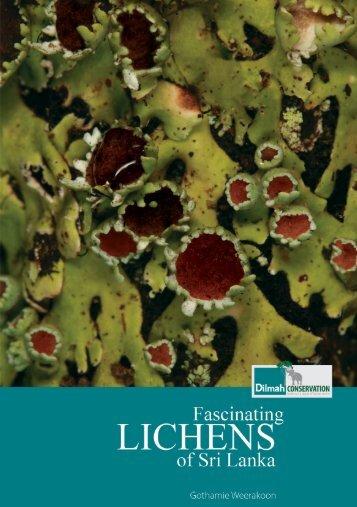 Fascinating Lichens of Sri Lanka