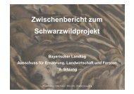 Zwischenbericht zum Schwarzwildprojekt