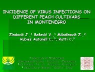 INCIDENCE OF VIRUS INFECTIONS ON DIFFERENT PEACH CULTIVARS IN MONTENEGRO