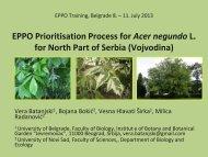 Acer negundo L. Taxonomic position - Izbis
