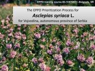 Asclepias syriaca L
