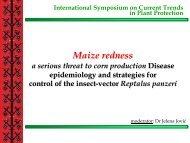 Maize redness