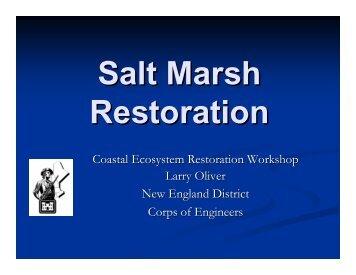 Salt Marsh Restoration