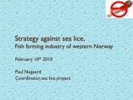 Strategy against sea lice