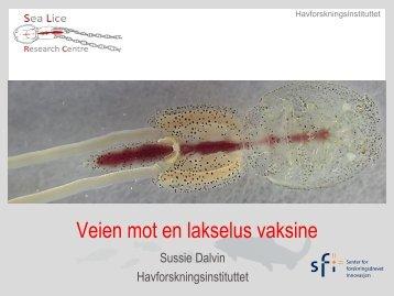 Veien mot en lakselus vaksine