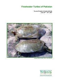 Freshwater Turtles of Pakistan